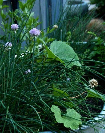 Herb Trough Garden