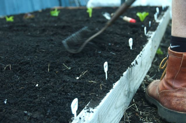 8 Money-Saving Tips on Gardening in the City