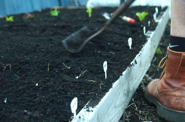 8 money saving tips on gardening in the city reluctant entertainer - Money saving tips in gardening ...