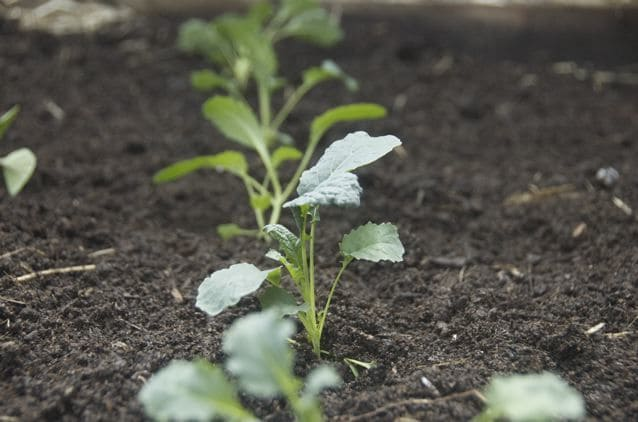 SOIL: 8 Money-Saving Tips on Gardening in the City