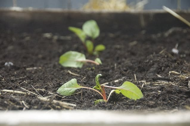Raised beds: 8 Money-Saving Tips on Gardening in the City