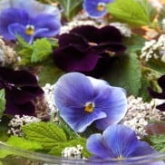 Pansies Centerpiece
