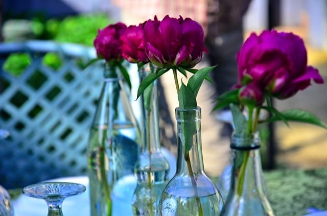 how to cut and preserve fresh peonies for entertaining - How To Cut Peonies