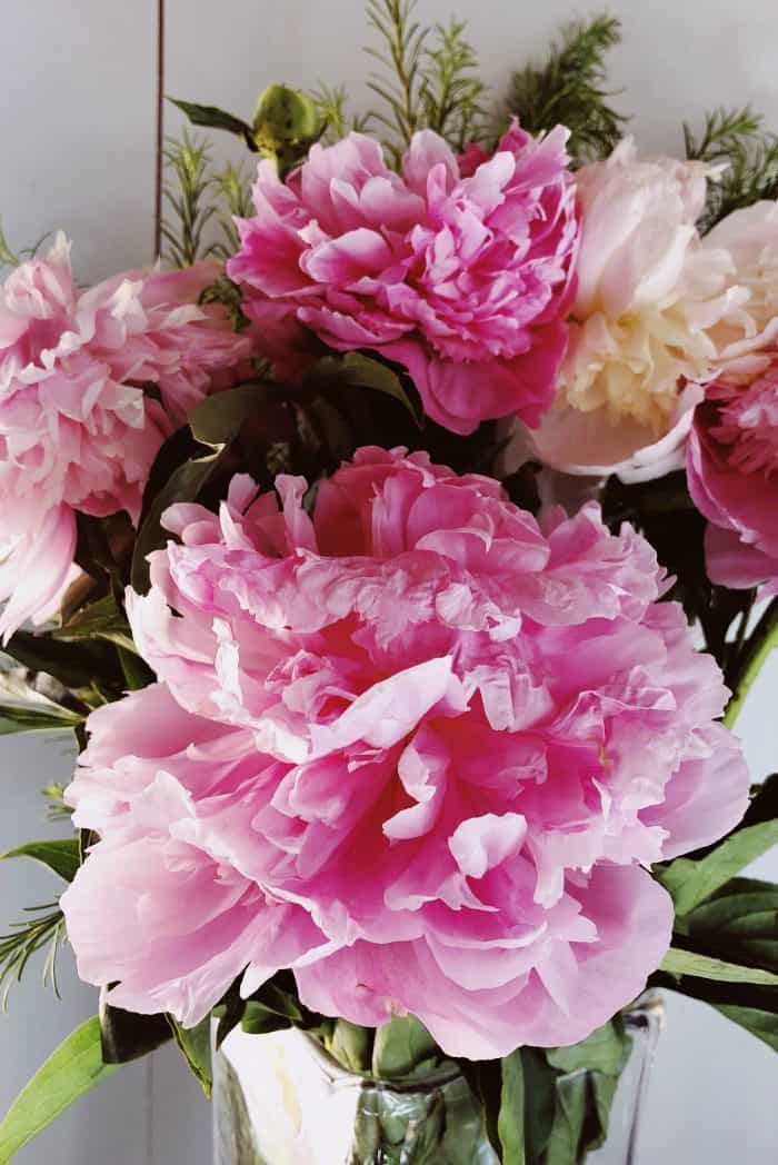 How to Cut and Preserve Fresh Peonies