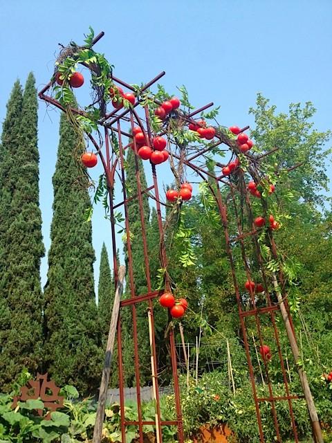 A Tomato Trellis Garden Party