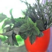 Fresh Herbs on the Counter | Reluctant Entertainer