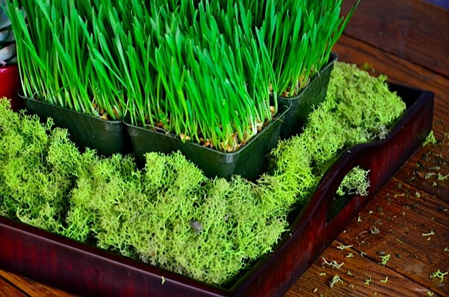 How To Make A Wheatgrass And Succulent Winter Tabletop