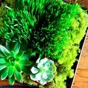 DIY Wheatgrass and Succulent Tabletop