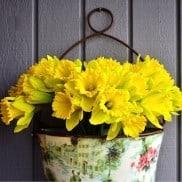 Front Door Daffodils | ReluctantEntertainer.com