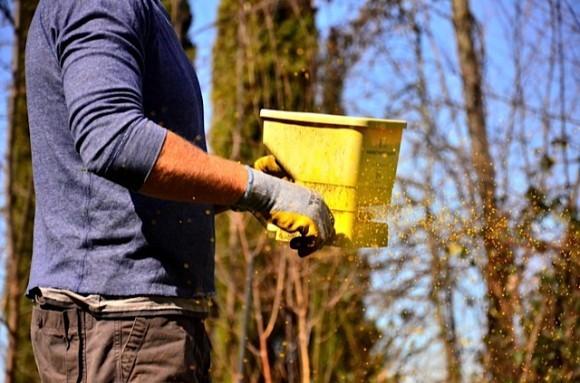 Fertilizing Lawn   ReluctantEntertainer