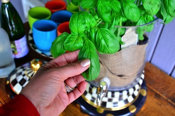 Beverage station with fresh basil