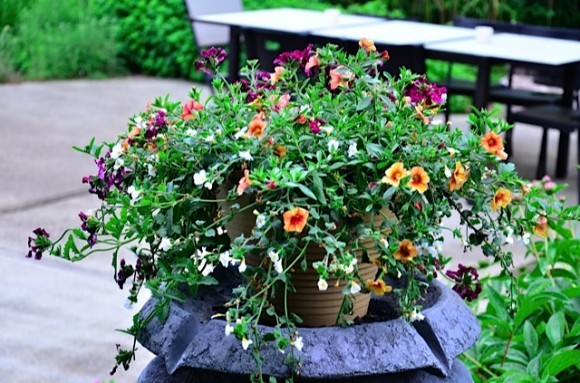 Repurposing A Water Feature For Flower Pot Ideas