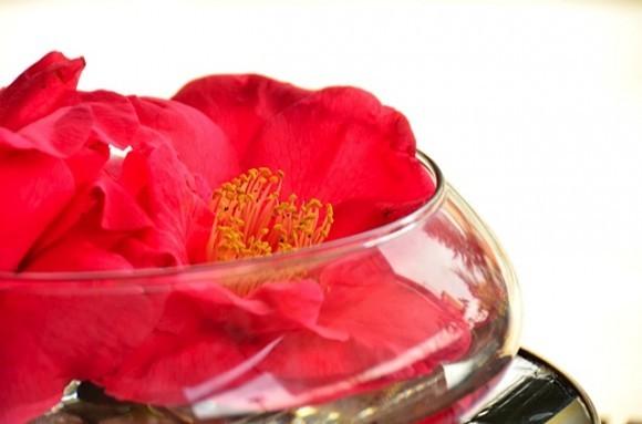Camellia Blossom | reluctantentertainer.com