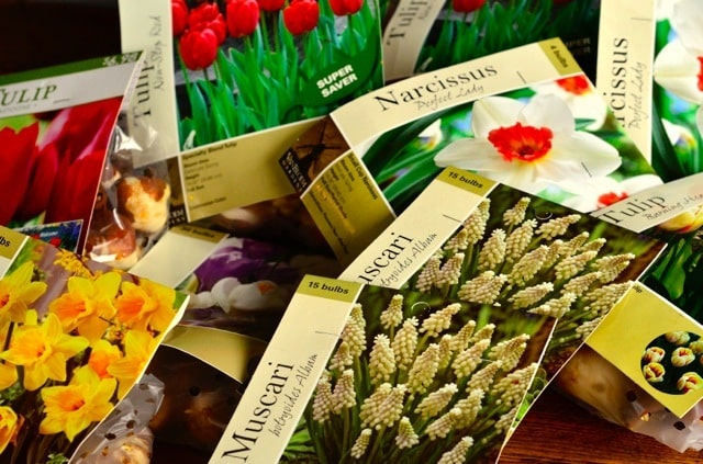 Too Late for Tulips? Tips on Planting Bulbs
