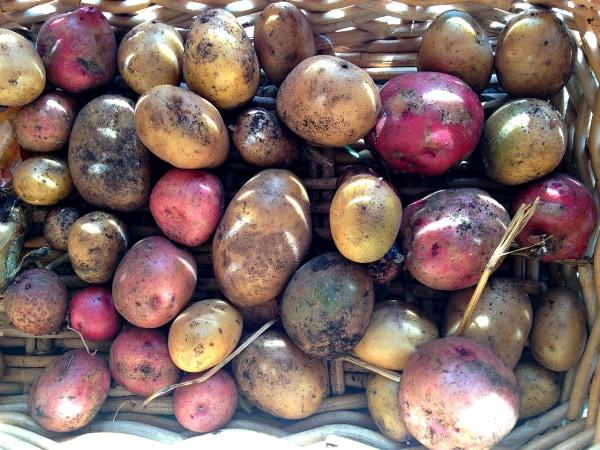 One-Pot Paprika Chicken Thighs - garden potatoes