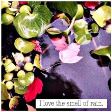 Lingering ... and The Smell of Rain | ReluctantEntertainer.com