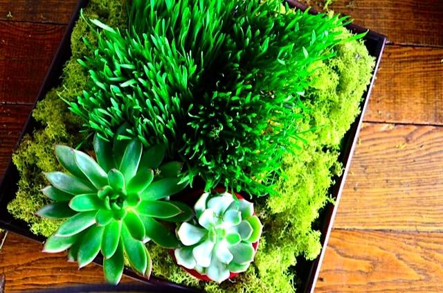Wheatgrass & succulent tabletop