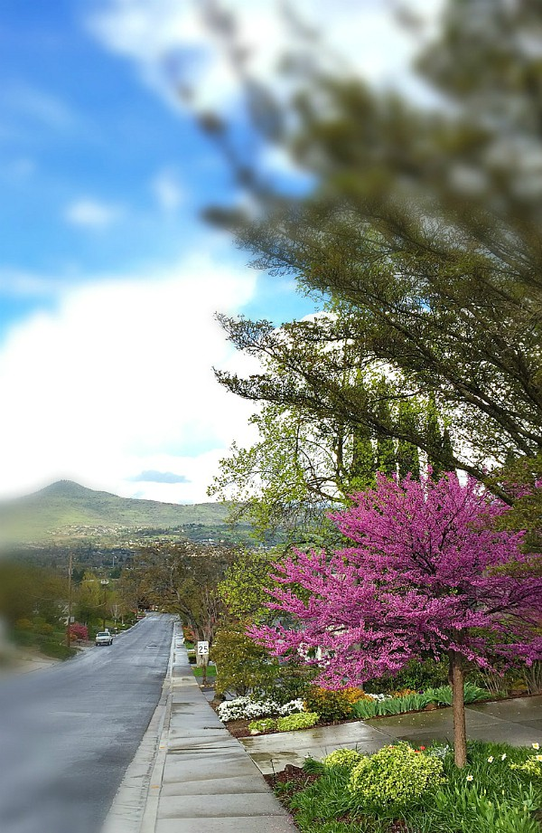 Springtime, Rogue Valley