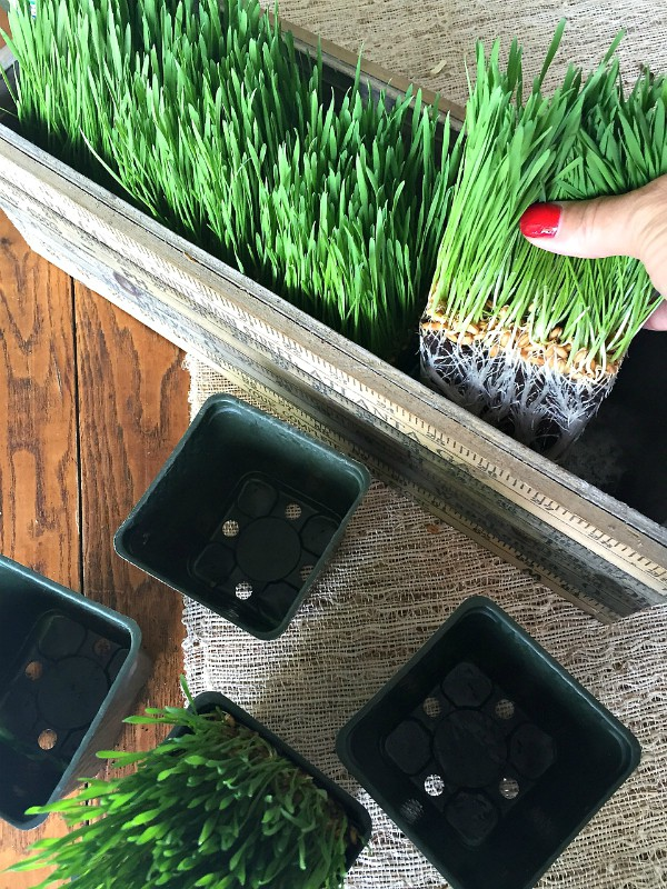 Wheatgrass Summer Centerpiece | ReluctantEntertainer.com