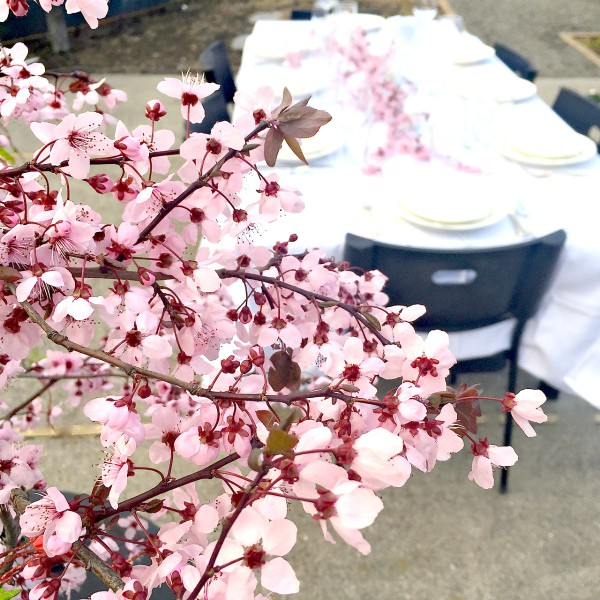 Setting the table with blossoms
