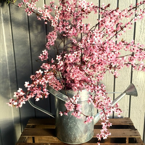 Rogue Valley blossoms