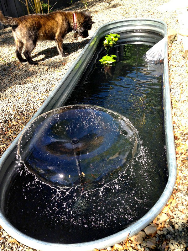 DIY Trough Pond