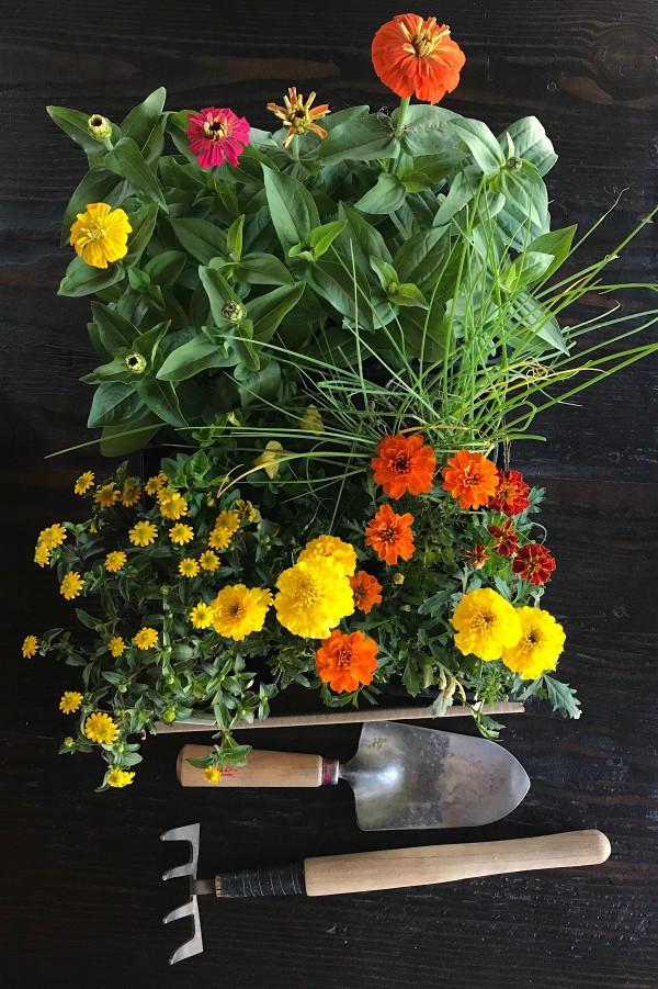 DIY Skinny Deck Gardening Beds