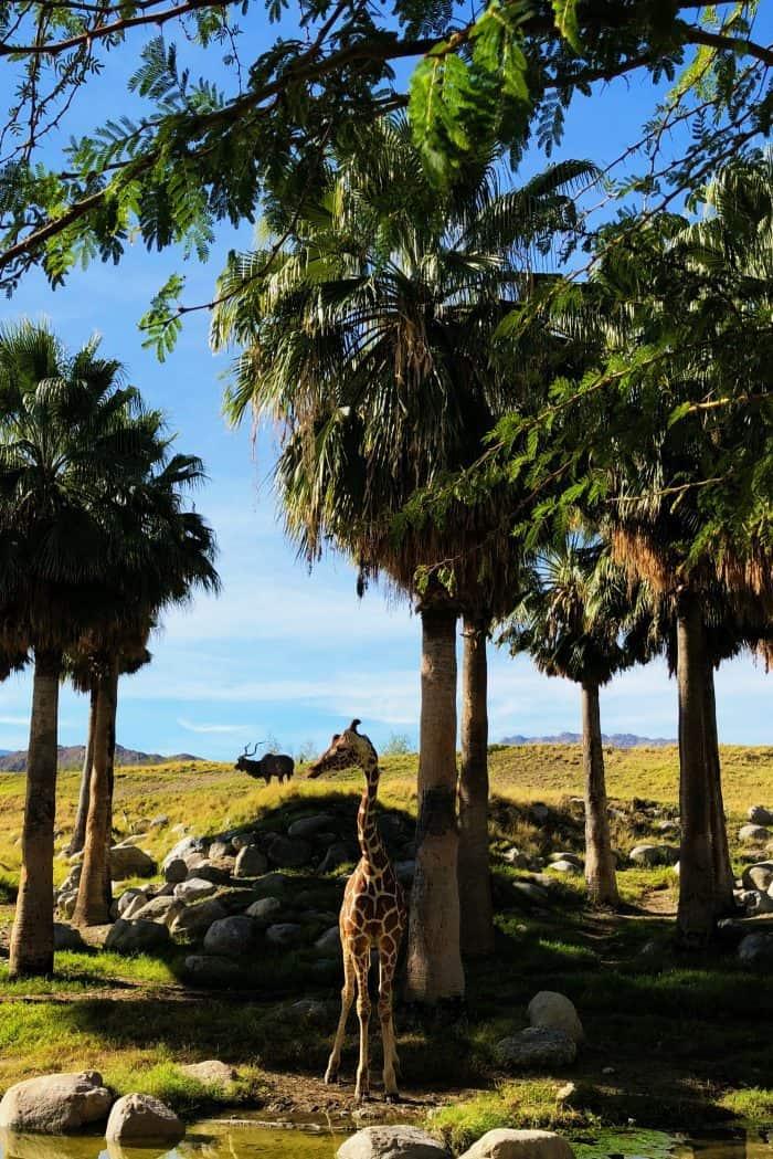 Living Desert Zoo Kimpton Rowan Hotel Palm Springs CA