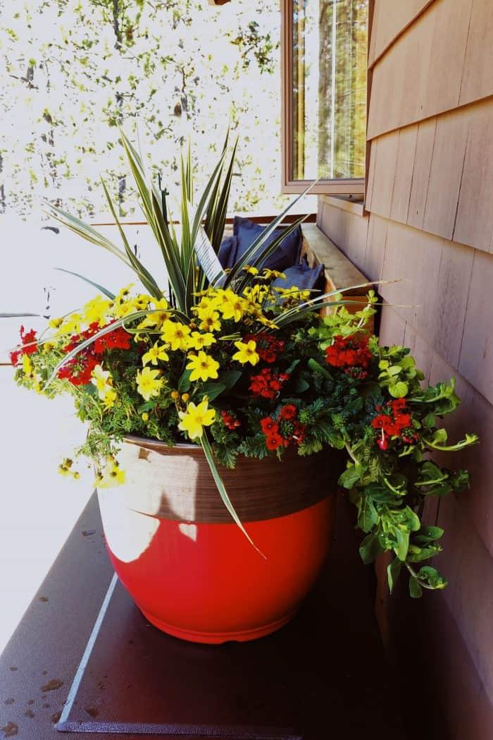 Spring plant Costco