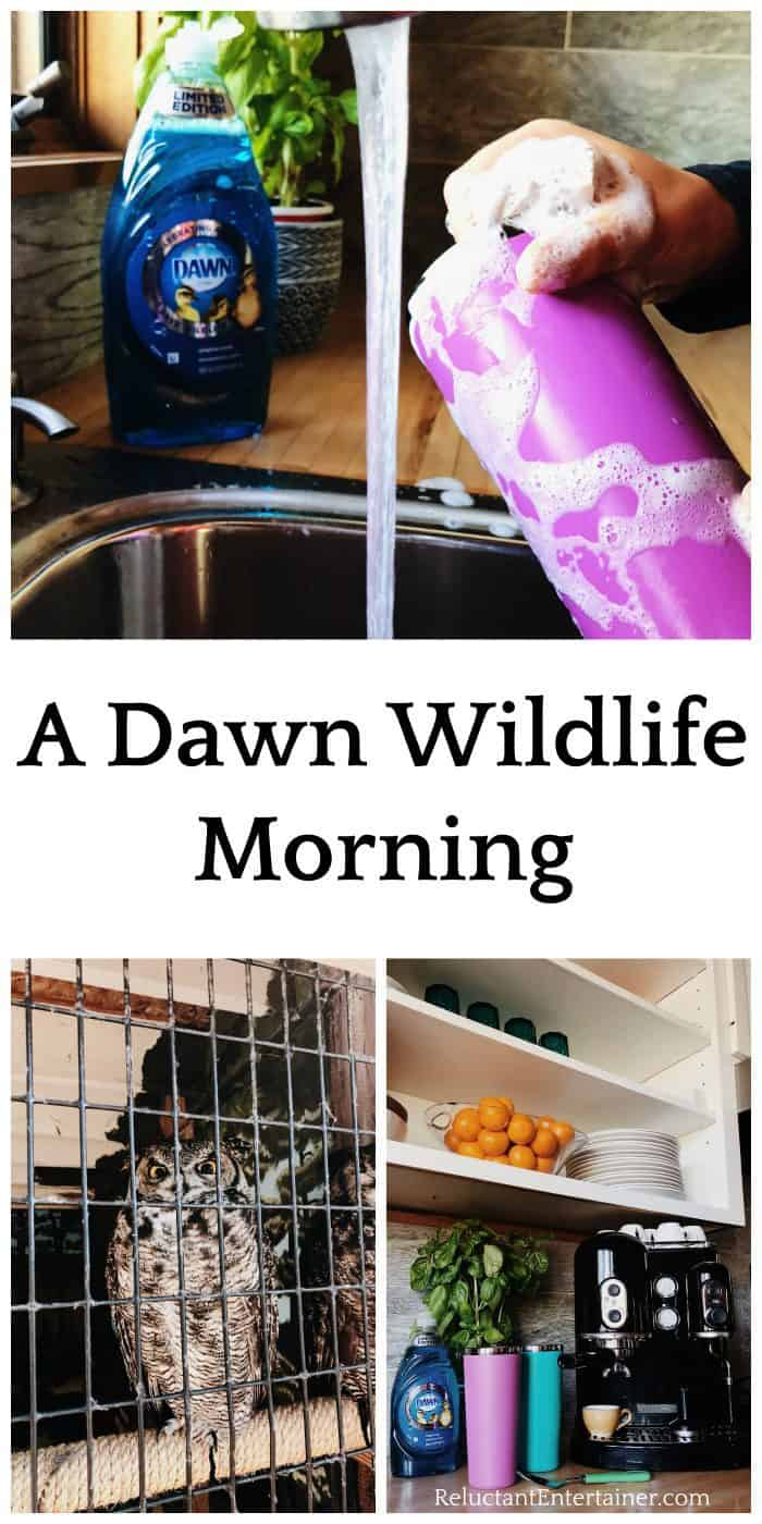 Dawn Wildlife Morning at Sunriver Nature Center Sweepstakes